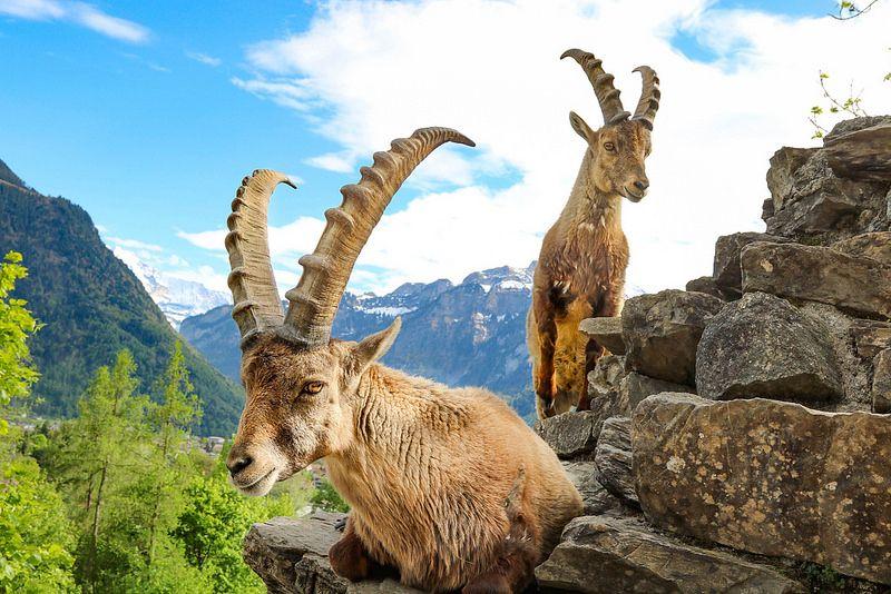 4 انشطة سياحية يمكن القيام بها في وايلد بارك في انترلاكن سويسرا